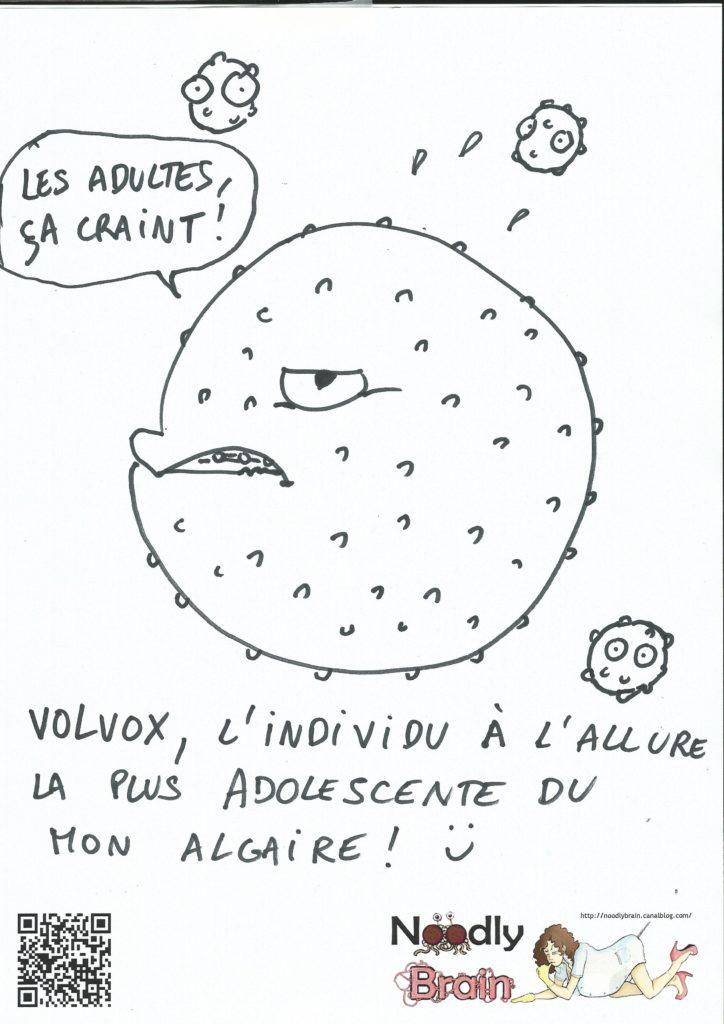 Volvox selon Mel
